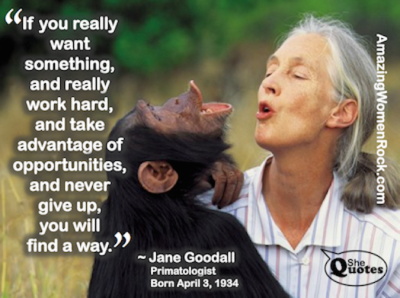 Jane Goodall never give up
